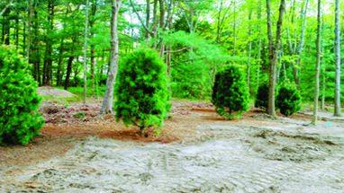 bush-dirt